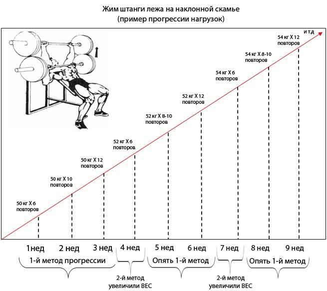 Бодибилдинг: программы тренировок, подробная методика
