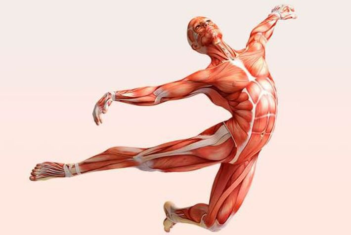 Тренировка фасций: упражнения для фасций