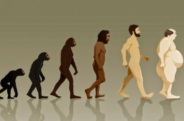 От эктоморфа к мезоморфу: эволюция телосложения